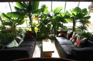 phoca_thumb_l_living_phoenix_plants_web-625x416
