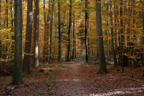 autumn_hapleka
